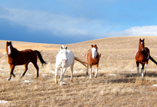 a-Slideshow-WY-horses-pasture