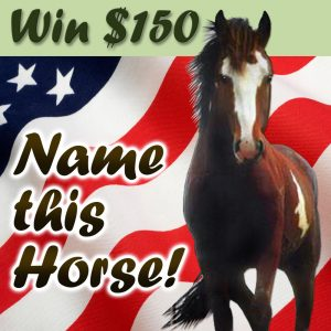 Name The Horse Contest
