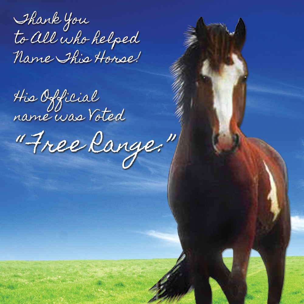 Free Range is the Name of the Horse