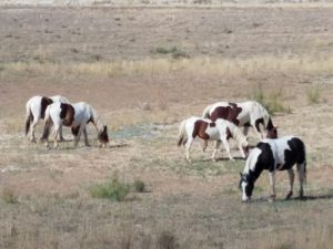 Counting Wild Horses