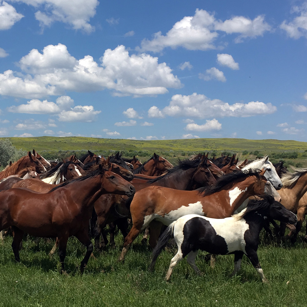 Local Trusted Agents who know the local area: Your Running Horse Realty Team has in depth experience with Wyoming Farms and Ranches in the Big Horn Basin area